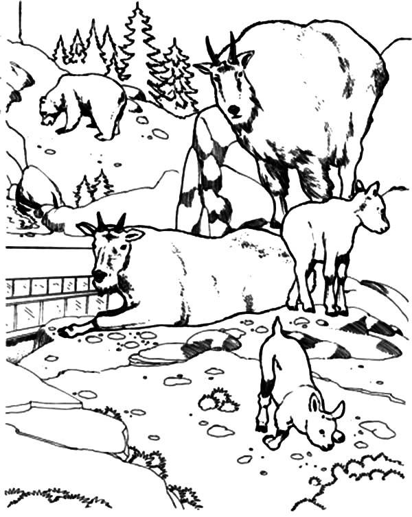 Mountain Goat, National Zoo Mountain Goat Coloring Pages: National Zoo Mountain Goat Coloring Pages