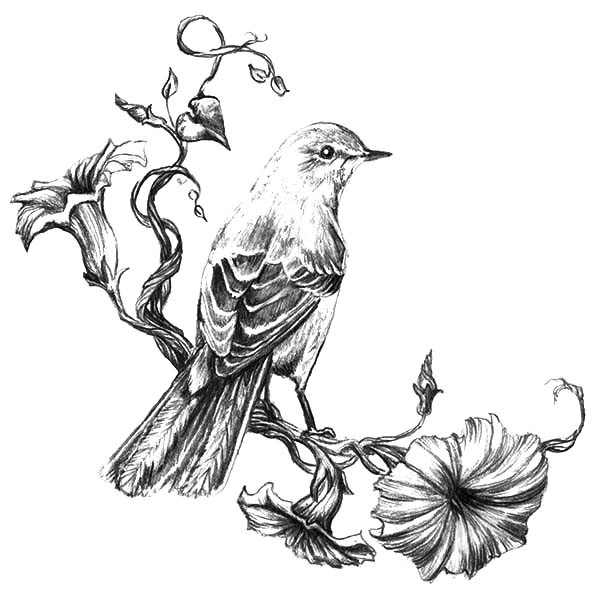 Mockingbird, Painting Mockingbird Coloring Pages: Painting Mockingbird Coloring Pages