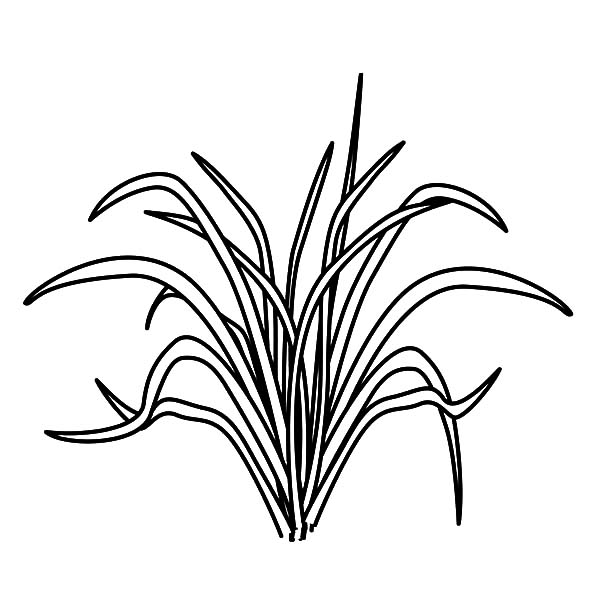 Grass, Picture Of Grass Coloring Pages: Picture of Grass Coloring Pages