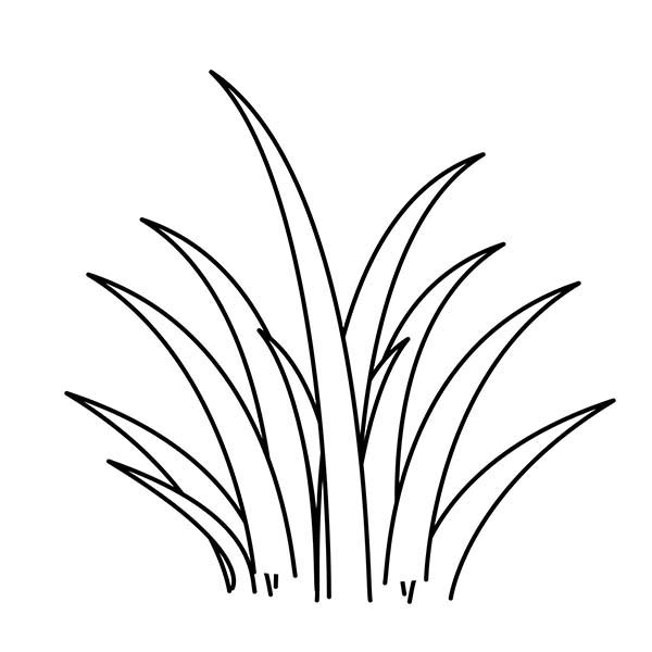 Grass, Plants World Grass Coloring Pages: Plants World Grass Coloring Pages