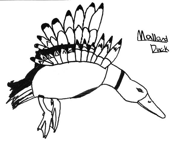Preschool Kid Drawing Mallard Duck Coloring Pages