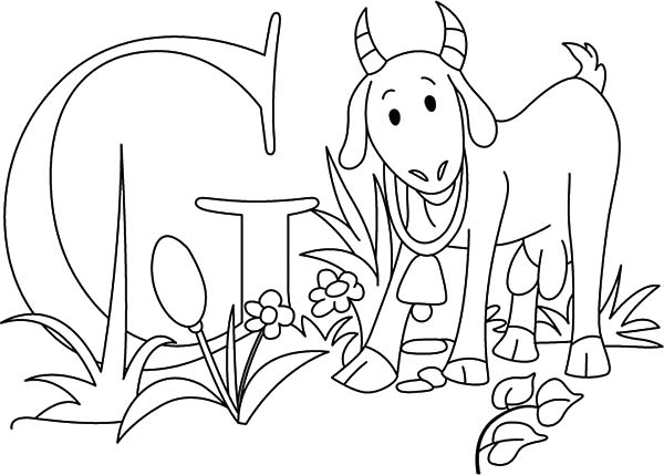 Goat, Preschooler Kid Learn About Goat Coloring Pages: Preschooler Kid Learn About Goat Coloring Pages