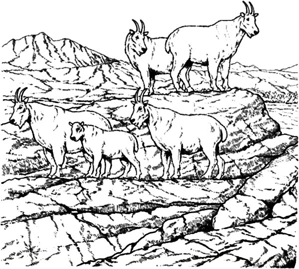 Mountain Goat, School Of Mountain Goat Coloring Pages: School of Mountain Goat Coloring Pages
