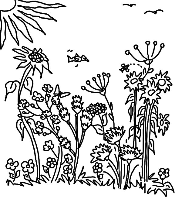 Garden, Sunny Day Garden Coloring Pages: Sunny Day Garden Coloring Pages