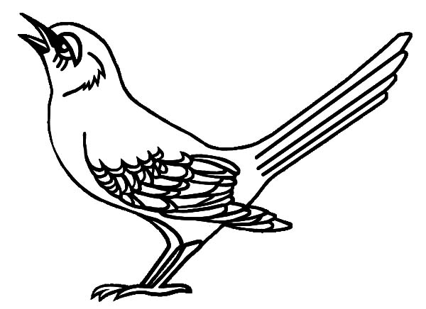 Mockingbird Tennessee Is Singing Coloring Pages