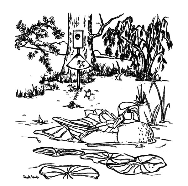 mallard ducks coloring pages - photo#39