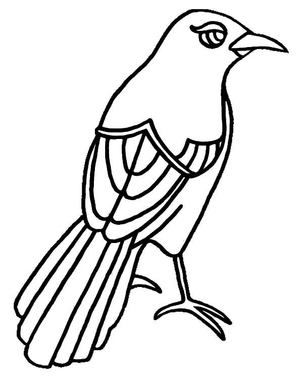 Texas Mockingbird Has Beautiful Eye Coloring Pages