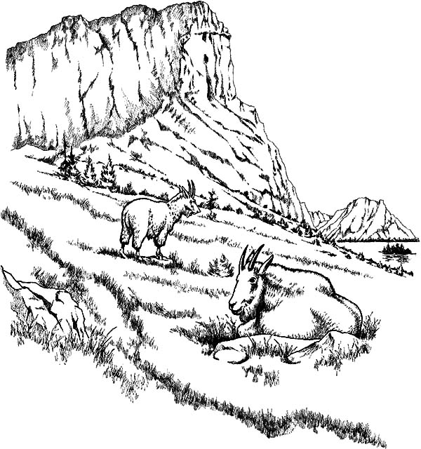 Two Mountain Goat Relaxing Coloring Pages | Color Luna