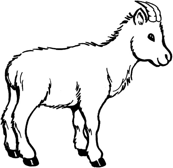 wildlife of goat coloring pages - Coloring Page Goat