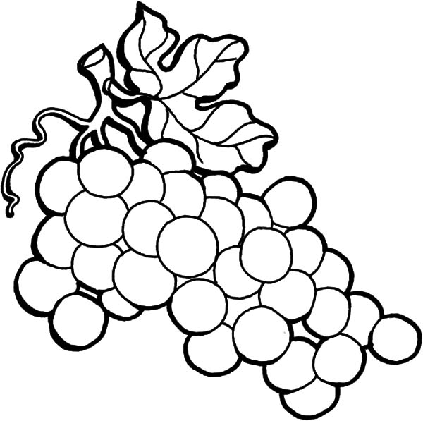 Grapes Wine On The Vine Coloring Pages