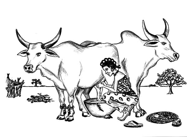 Women Milking Two Big Cow Coloring Pages