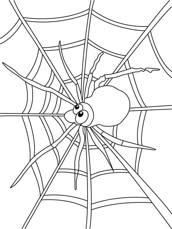 Spider Watch for Insect on Spider Web Coloring Page ...