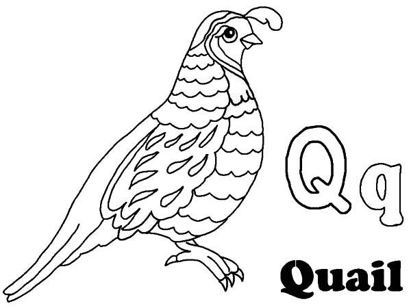 Alphabet Q Is For Quail Coloring Page : Color Luna