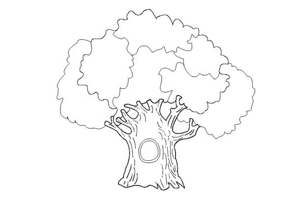 coloring pages of oak trees   An Old Oak Tree Coloring Page : Color Luna