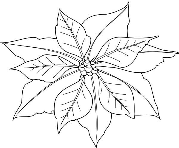 It is a picture of Selective Poinsetta Coloring Page