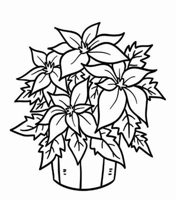 Poinsettia in a Bucket Coloring Page | Color Luna