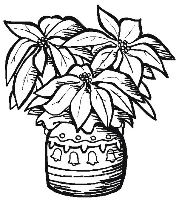 Pottery Poinsettia Coloring Page Color Luna