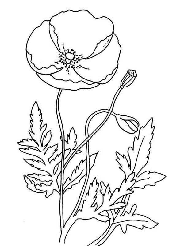 Remembrance Day With Poppy Coloring Page Color Luna