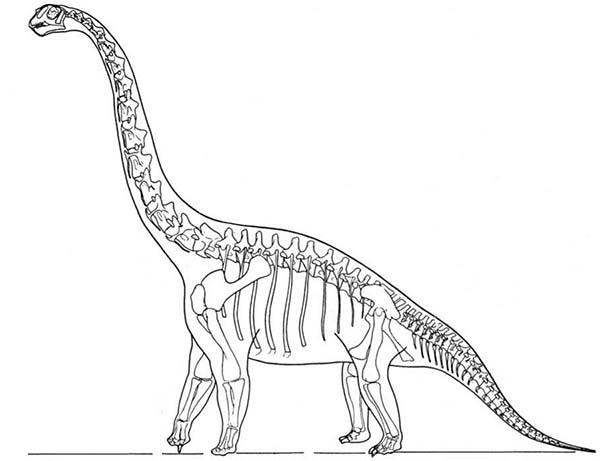 Skeleton Brachiosaurus Dinosaurus