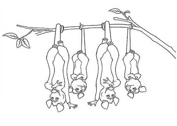 Four Brothers of Possum Coloring Page: Four Brothers of ...