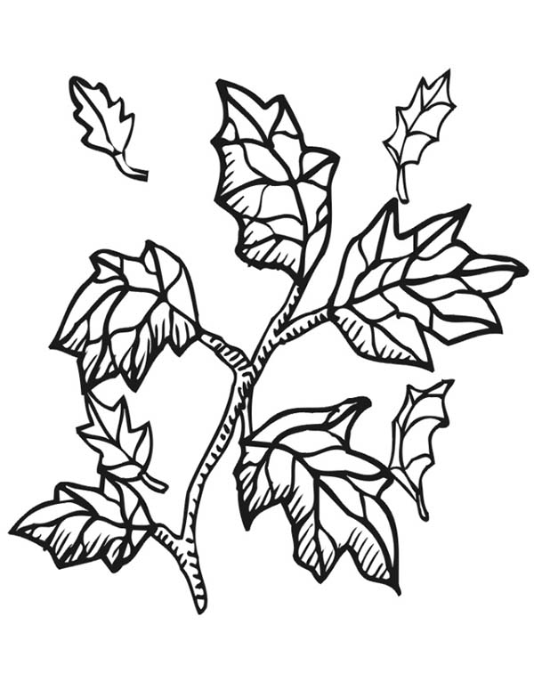 Autumn Leaf From Tree Branch Coloring Page : Color Luna