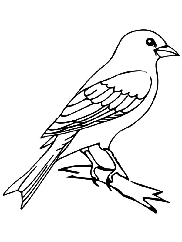 Mockingbird Outline Coloring Pages